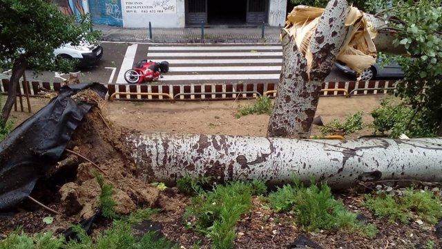 Arbol y moto caídos por una tormenta