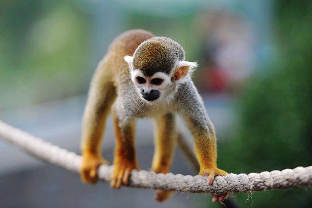 Un Hombre Se Cuela En Un Zoo Para Robar Un Mono Para Su Novia Acaba En Una Pelea Con Los Simios Y Detenido