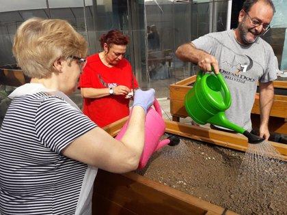 El Hospital del Mar pone en marcha su primer huerto terapéutico para pacientes