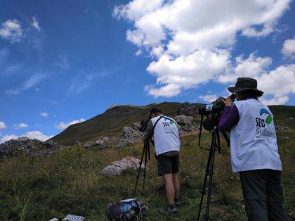 Cerca de 100 especies diferentes de aves cruzan los Pirineos aragoneses en su paso migratorio hacia el sur