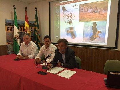 La Junta presenta el plan de conservación del milano real, en peligro de extinción