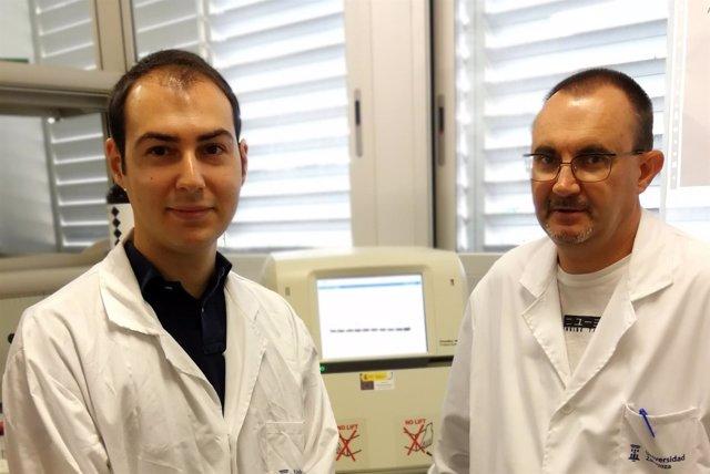 Investigadores BIBI logran regulan proteína implicada diabetes y metástasis