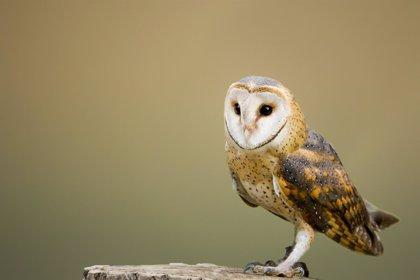 Medio Ambiente alerta de la muerte de aves protegidas abatidas las últimas semanas
