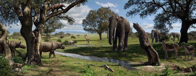Fauna que habitaba en Madrid hace 15 millones de años