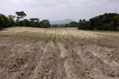 La sequía amenaza con dejar dos millones de hambrientos en Centroamérica