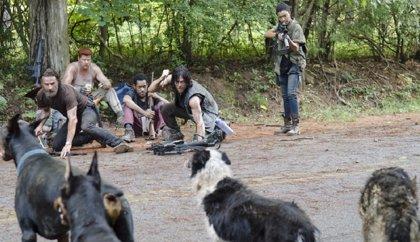 The Walking Dogs: Así es la versión canina de The Walking Dead
