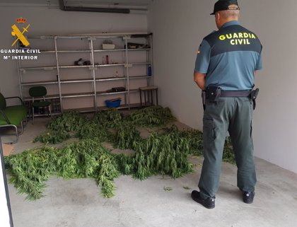 Detenidas dos personas y desmantelada una plantación de marihuana en Peñarroya-Pueblonuevo (Córdoba)