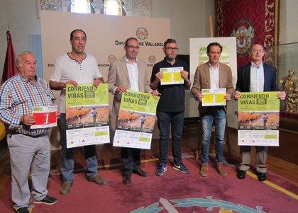 'Corriendo entre viñas' transcurrirá por los viñedos de las D.O de Valladolid para promover el deporte y el enoturismo