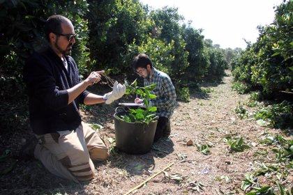 Agricultura ultima el anteproyecto de ley para la innovación agroalimentaria con el IVIA como dinamizador