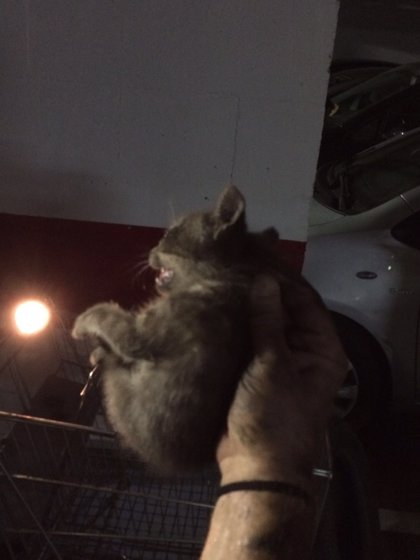 """El SAB critica un cargo de 115 euros a un vecino por llamar a los bomberos ante un gato atrapado """"en un garaje"""