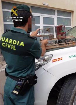 Agente Guardia Civil con jilgueros decomisados