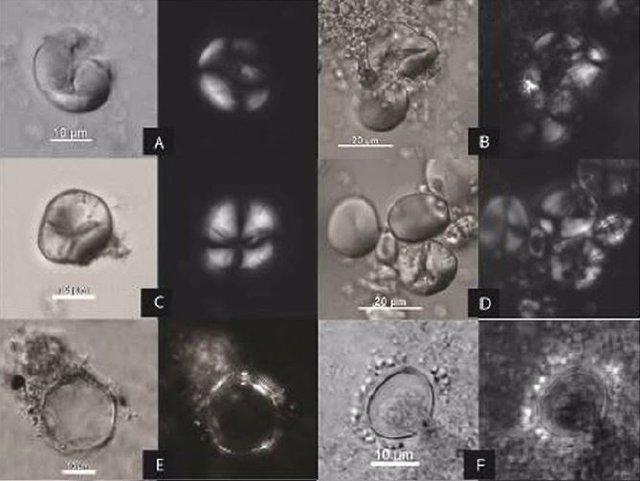 Rastros de almidones antiguos en la cueba de Raqefet