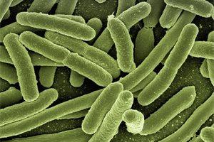 ¿Qué es el estreptococo y cómo se transmite?
