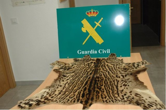 Piel de ocelote incautada por la Guardia Civil