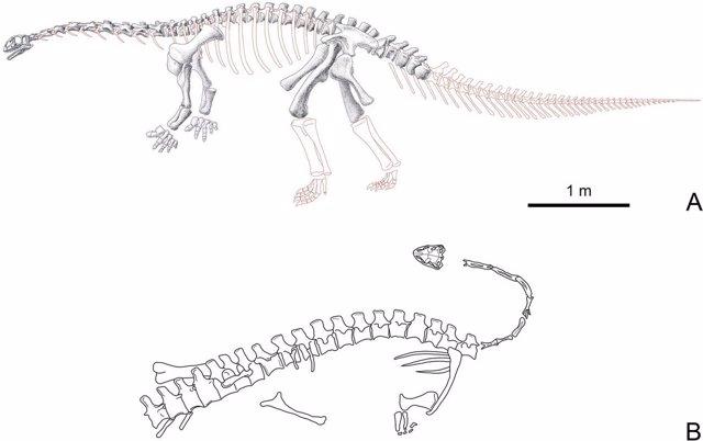Esqueleto de Yizhousaurus sunae