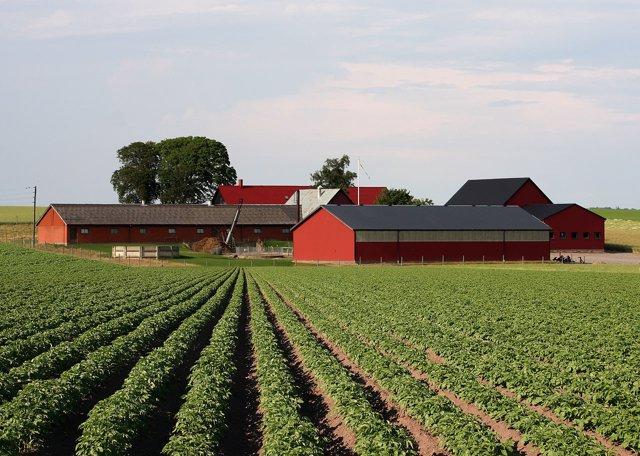 Campo de patatas en Suecia