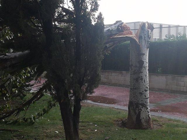 Árbol partido por una tormenta, en una imagen de archivo