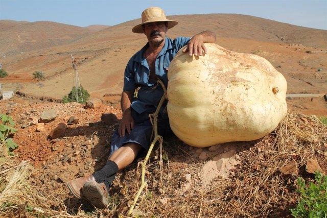 El agricultor, Francisco Estupiñán, junto a la calabaza gigante