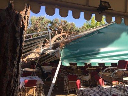 Un árbol de grandes dimensiones aplasta la carpa de un restaurante de El Pardo sin causar heridos