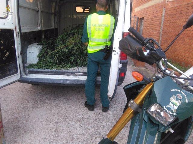 Desmatelan un cultivo de marihuana en Santa Cristina d'Aro