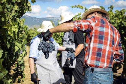 El DOE publica las resoluciones de las solicitudes de ayuda a la reestructuración y reconversión de viñedo