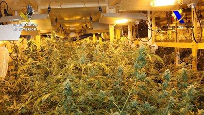 Cuatro personas detenidas y 2.800 plantas de marihuana incautadas en una operación de la Guardia Civil en Álava