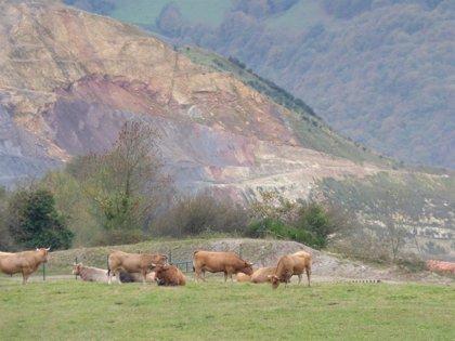 FAPAS advierte de la presencia de ganado alimentándose en pastos con alto contenido de arsénico