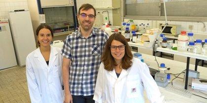 Descubren un mecanismo que optimiza la producción de proteínas que podría evitar tumores