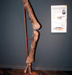 L'IEI de Lleida exposa el patrimoni paleontològic que la institució ha recollit en els darrers quaranta anys (ACN)