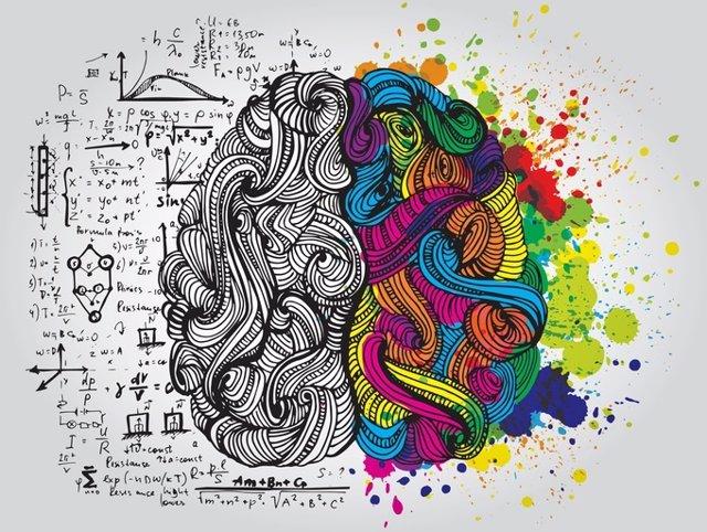 Cerebro, plasticidad