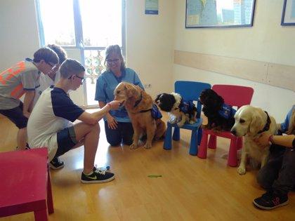 La terapia con perros para niños con disfasia muestra resultados prometedores