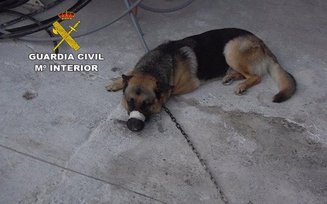 [Grupocanarias] Nota De Prensa Maltrato Animal