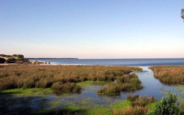 WWF alerta a los europarlamentarios que visitan Doñana sobre la situación 'crítica' del espacio