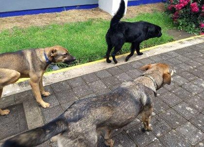 Una universidad en argentina adopta como policías a tres perros abandonados