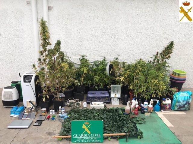 [Grupocanarias] La Guardia Civil Incuta 96 Plantas De Marihuana En Una Vivienda