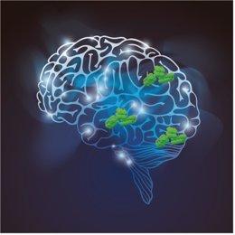 Esquema del cerebro con los agregados