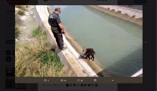 Imagen del rescate ofrecida por Agentes Medioambientales de la Región