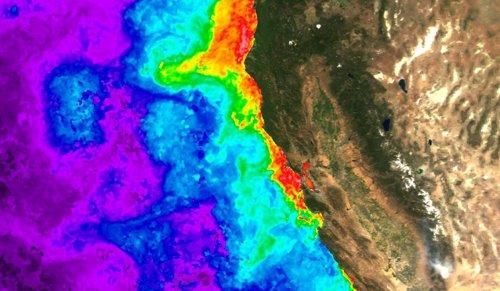 Floración de algas en la costa de California vista desde satélite
