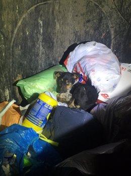 Perro abandonado en Lugo en la basura