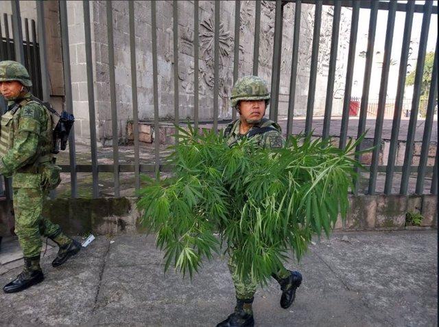 Miembros de la Secretaría de la Defensa Nacional retiran plantas de marihuana