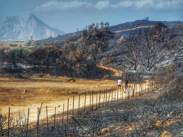 Monte quemado en La Línea
