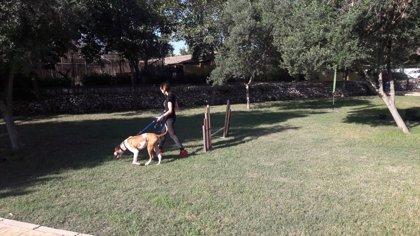 """Un total de 32 perros desfilan en Son Reus para incentivar la adopción y """"mejorar"""" la situación del centro"""