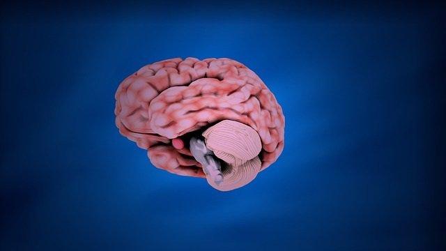 Cerebro, cerebelo