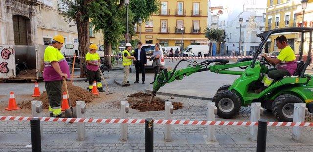 Trabajos para la plantación de árboles en la Plaza del Pumarejo
