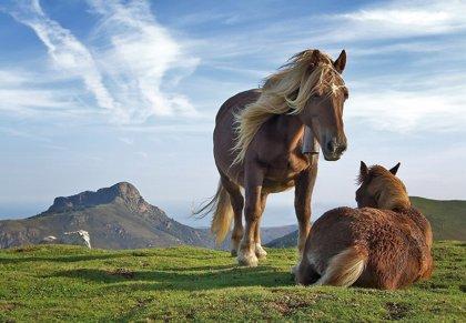 Llega a España, Portugal y América Latina el canal de deportes ecuestres H&C (Horse and Country)