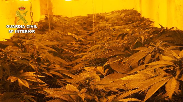 Marihuana incautada en una operación de la Guardia Civil