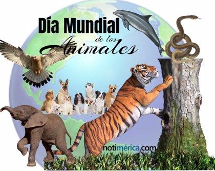¿Por qué el 4 de octubre es el Día Mundial de los Animales?