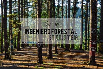 4 de octubre: Día del Ingeniero Forestal en Colombia, ¿qué motivó la celebración de esta efeméride?