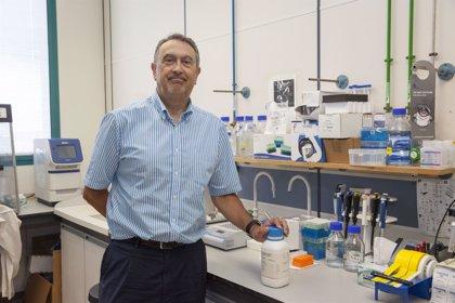 Investigadores españoles consiguen modificar un fármaco contra el cáncer para reducir su toxicidad
