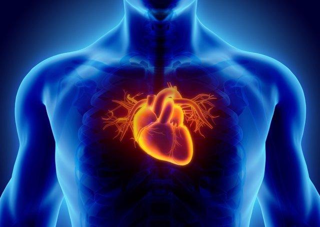 La Exquisita Coreografía Del Corazón Humano En Desarrollo